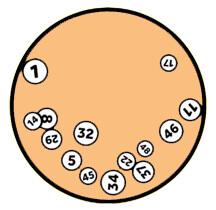 laranja orteio loteria ecipiente